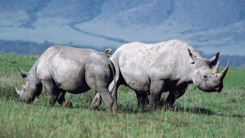 Call To Artists | At the beginning of the 20th century, 500,000 rhinos roamed Africa and Asia. But today very few rhinos survive outside national parks and reserves due to persistent poaching and habitat loss over many decades. Two species of rhino in Asia—Javan and Sumatran—are critically endangered.