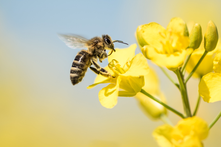 Call To Artists | Between 1947 and 2005, the number of honeybees in the United States declined by over 40 percent, from 5.9 million to 2.4 million. A third of the bees die during the winter months.