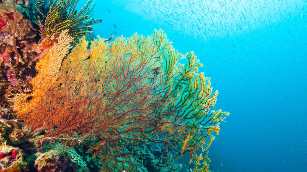 Pierrick via his art looks at highlighting that in the past three decades, our oceans have lost half its coral cover, pollution has caused deadly starfish outbreaks, and global warming has produced horrific coral bleaching.