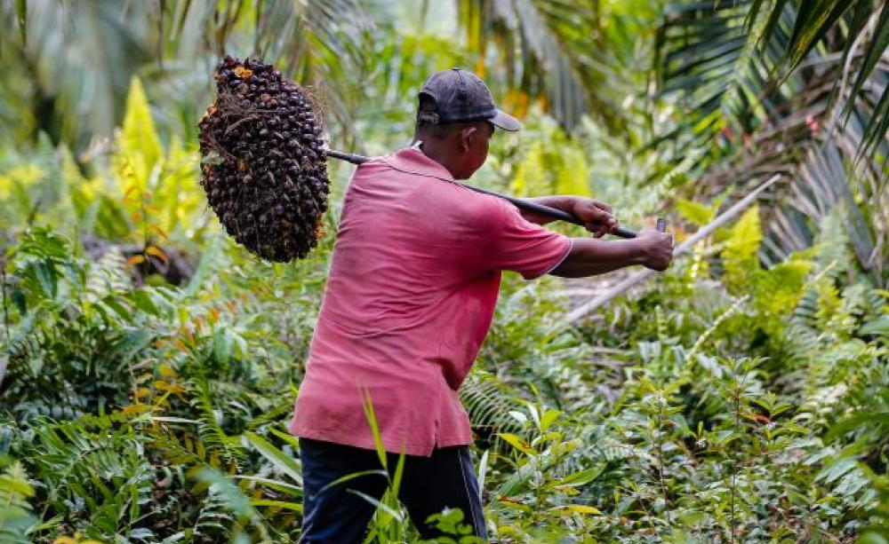 Call To Artists | Palm oil — which appears in a dizzying amount of food and cosmetic products, and is a feedstock for biofuel — poses many environmental problems. It's the largest driver of Indonesian deforestation, which destroys habitat and contributes to climate change.