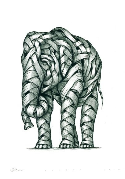 """""""Asian Elephants"""" Ink and graphite on paper. 59.4 x 42cm. Value £350."""