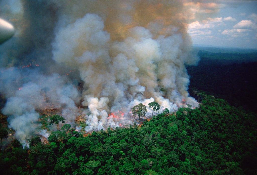 Tommy Fiendish via his art wants to bring you the facts about why the Amazon forest is burning down