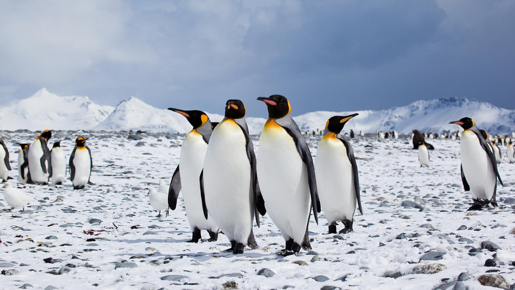 Call To Artists | Antarctica's emperor penguin population has suffered such severe climate-related breeding issues that it's at risk of disappearing by the year 2100, according to a 2019 study by the British Antarctic Survey