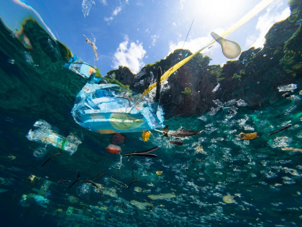 Camilla Brendon is aiming at highlighting the disastrous effects of plastic leaching and what it means for marine organisms such as the phytoplankton