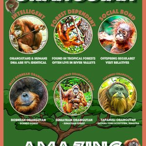 Orangutan Amazing | Poster on Fuji Gloss paper